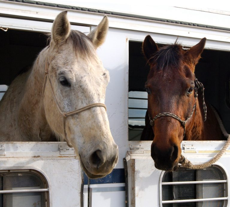 horses in trailer choice adhesives